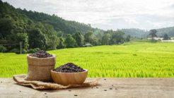 Top 10 Best Brown Rice Brands 2018